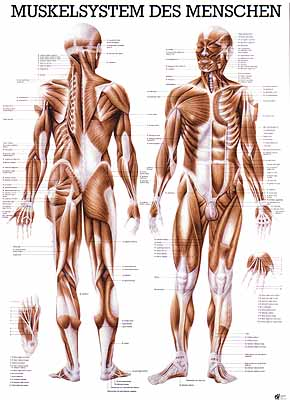 Frauen mit muskeln treffen Stärke braucht keine Muskeln: Diese an tödlichem Muskelschwund ...